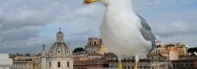 Gabbiano-grandangolare-a-Roma-a23261186